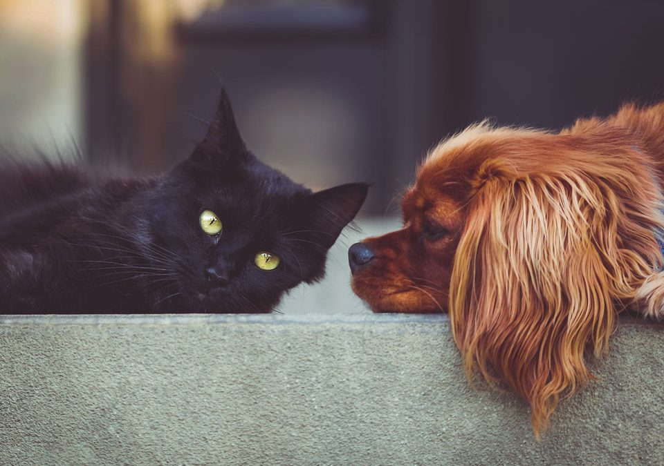 Ticks, 7 Signs Your Dog Or Cat Has One.